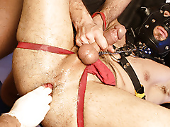 bdsm masks jock straps domination fisting sling blow extreme play